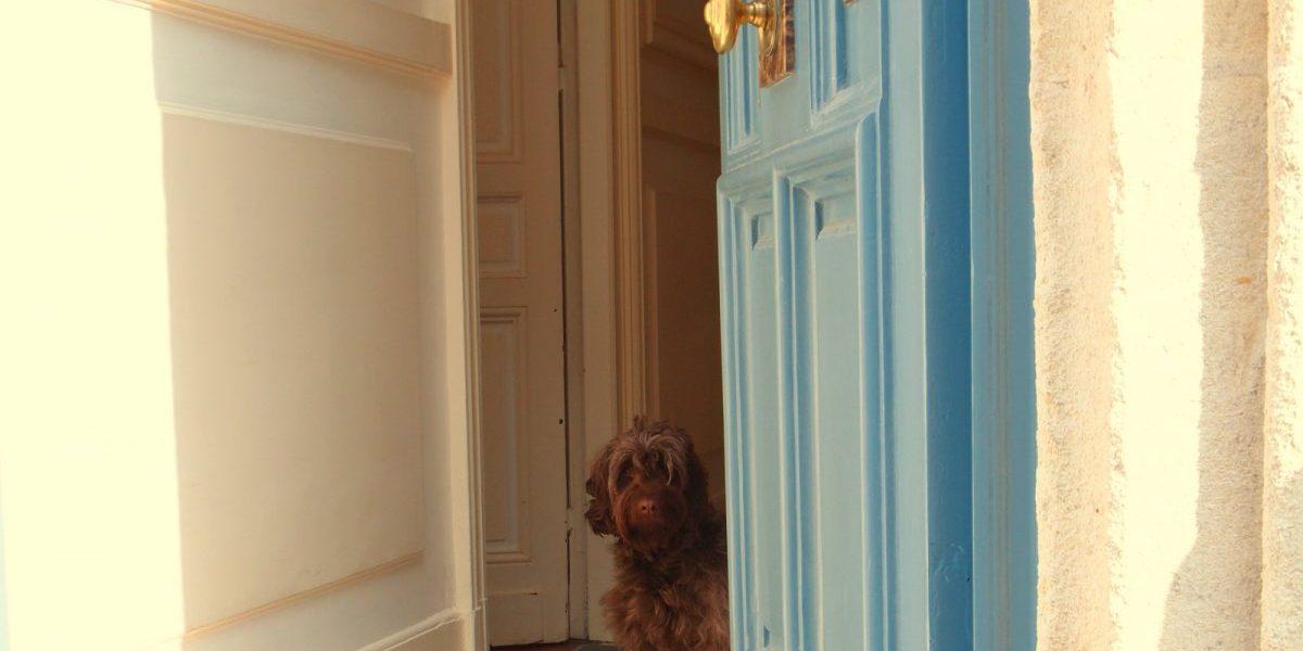 Toffee : le chien de la maison