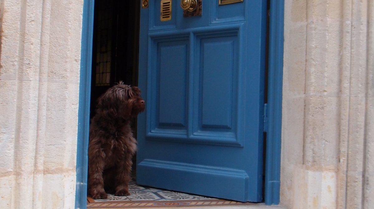 Le chien de la maison veille